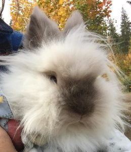 Snowball the Bunny